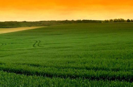 Őszi búza növényvédelme I.